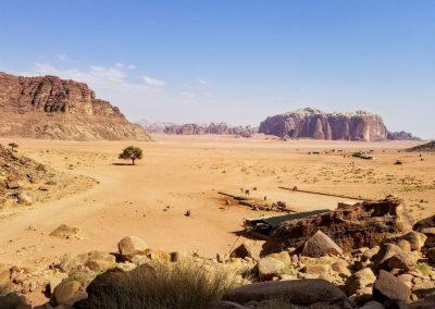 A lone tree in a desert in Jordan